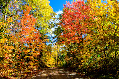 Autumn's Colorful Roads