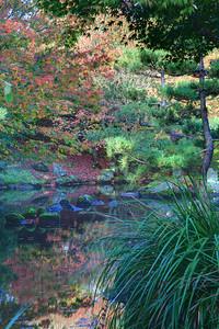 Autumn around the pond