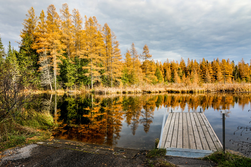 Golden Tamaracks at the High Lake Boat Landing 4