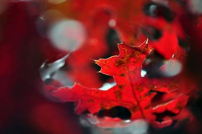 autumn leaf - original