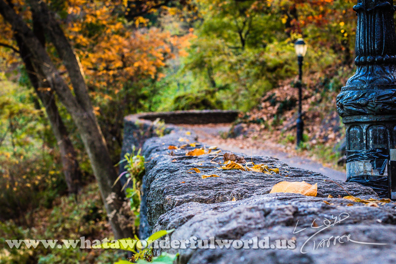 Fort Tryon Park_016_20161112