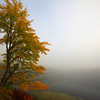 """Autumn's Foggy Morning"""