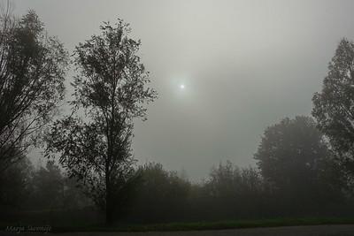 Mistig vanmorgen 3