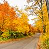 Mellow Yellow Landscape