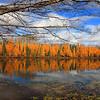"""Autumn's Golden Jubilee"""
