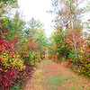 Our Colorful Autumn Trails 1