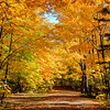Autumns Walk in the Park  2