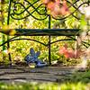 Autumn Garden Snapshots