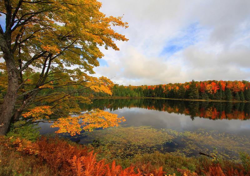 """""""Autumn's Postcard"""""""