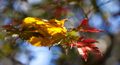 This display of colour caught my attention as the sun shone through the leaves to highlight these few
