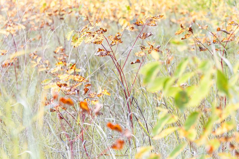Grassy Measows