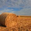 """Autumn's Harvested Fields"" 1"