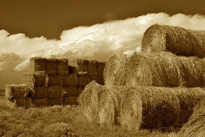 Hay bales along CO-14, near Walden