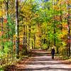 Autumn Roads 6