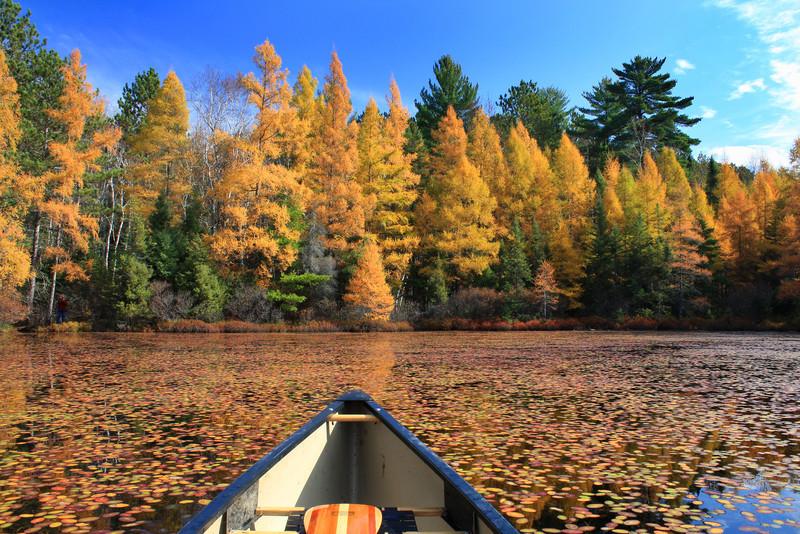 "Autumn's Gold Rush"""