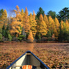 Autumn's Gold Rush""