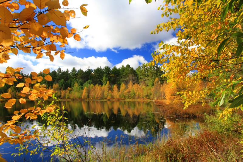 Octobers Autumn Special