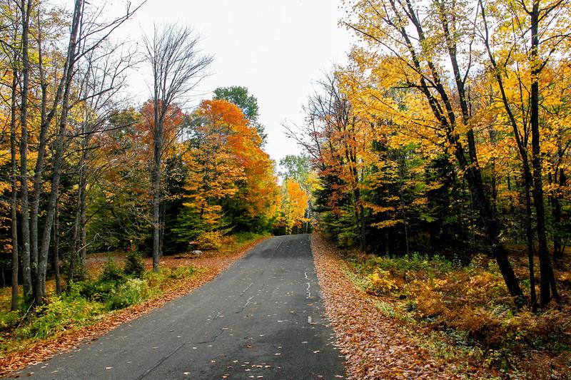 Late Autumn Color