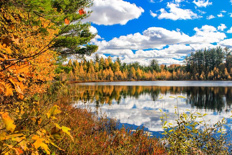 Fall's Golden Rewards