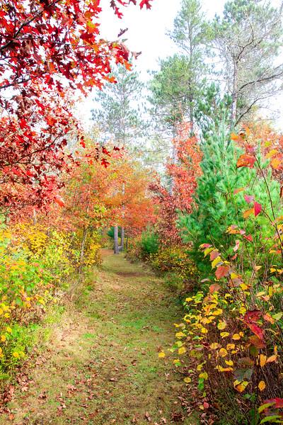 Our Colorful Autumn Trails 3
