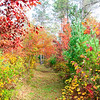Our Colorful Autumn Trails 3