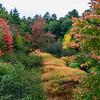 A River of Autumn Colors