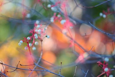 Autumnscenes