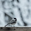 Lots of snow today. Feeling sad for the little birds.