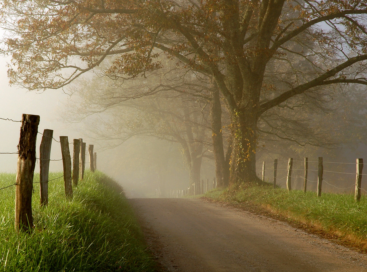 """Along The Road In Cades Cove"".  This is the famous Spark's Lane in Cades Cove, Great Smoky Mountains.  Photographed on a foggy fall morning.  This image won first place in the Man And Nature category on Nature Photographers Network (www.naturephotographers.net) in 2005."