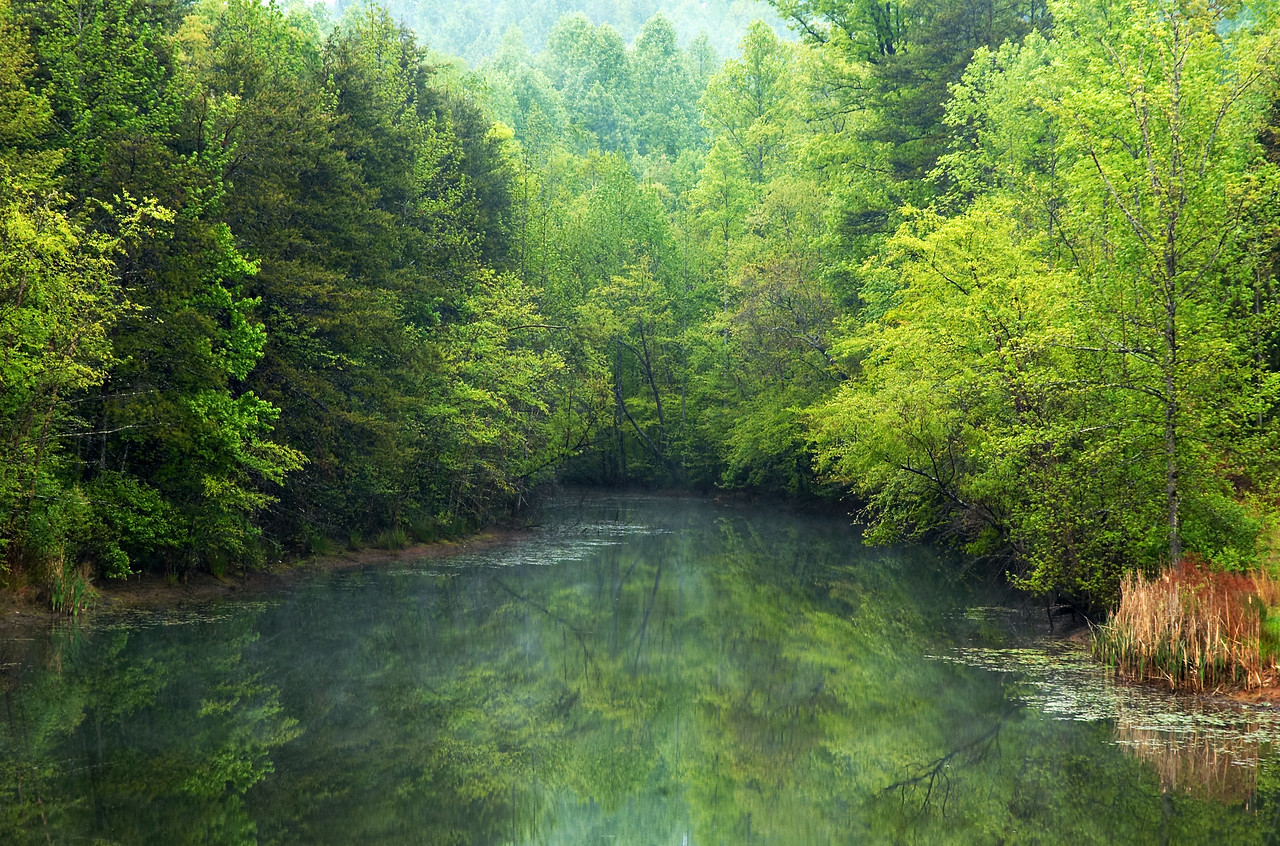 """""""Spring At Willow Lake""""  Early spring greens on a small lake in western North Carolina"""
