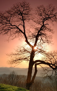 """Sunset Tree"" The sun setting behind a tree, viewed from the Blue Ridge Parkway."