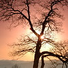 """""""Sunset Tree"""" The sun setting behind a tree, viewed from the Blue Ridge Parkway."""