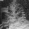 SNOWSTORM in B&W