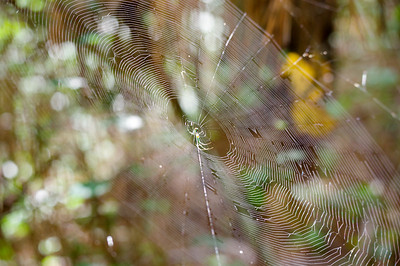 spiderweb at Huntinton Beach State Park