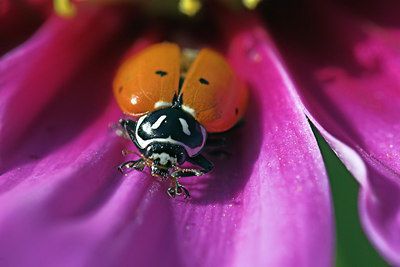 Laby Bug, Lady Bug, Fly Away Home