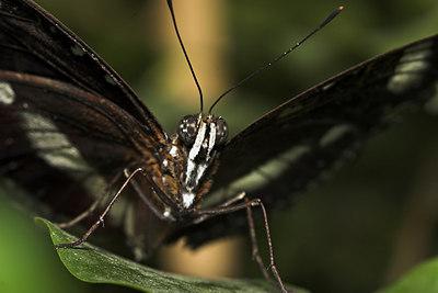 Butterfly 2 - Royal Melbourne Zoo Australia
