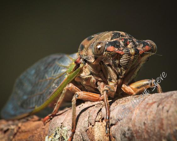 Misc Bugs