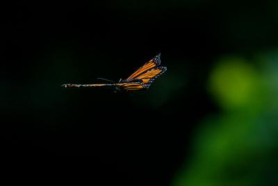 Monarch 12
