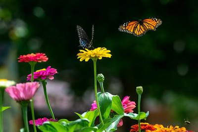 Monarch 18