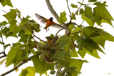 Baby Birds Spring 2013