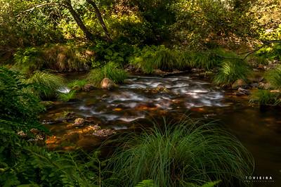 rio Alfusqueiro