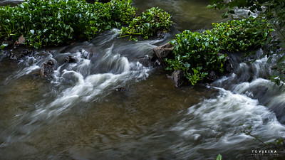 Rio Águeda - Travassô