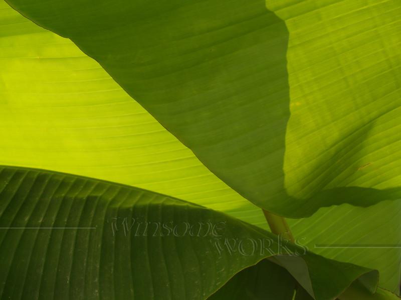 Abstract banana leaves