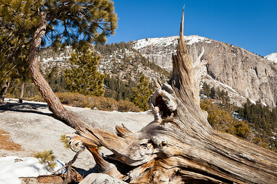 View of Mount Watkins and a weather beaten tree trunk. Notice the pine tree on left growing out of a crack in the granite.