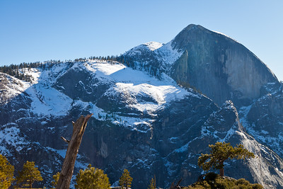 Late morning view of Half Dome with the lone pine at lower right.