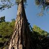 Bogus artsy tree