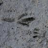 Bird tracks in the marsh