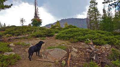 Zuri just loves hiking in the high Sierra.