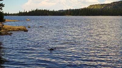 Zuri enjoys a swim-and-retrieve in Silver Lake.