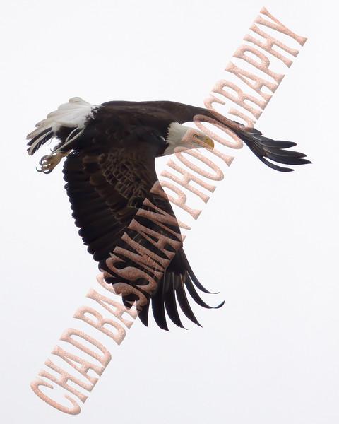 eagle 8x10-2